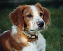Les 5 races de chien idéales pour la famille