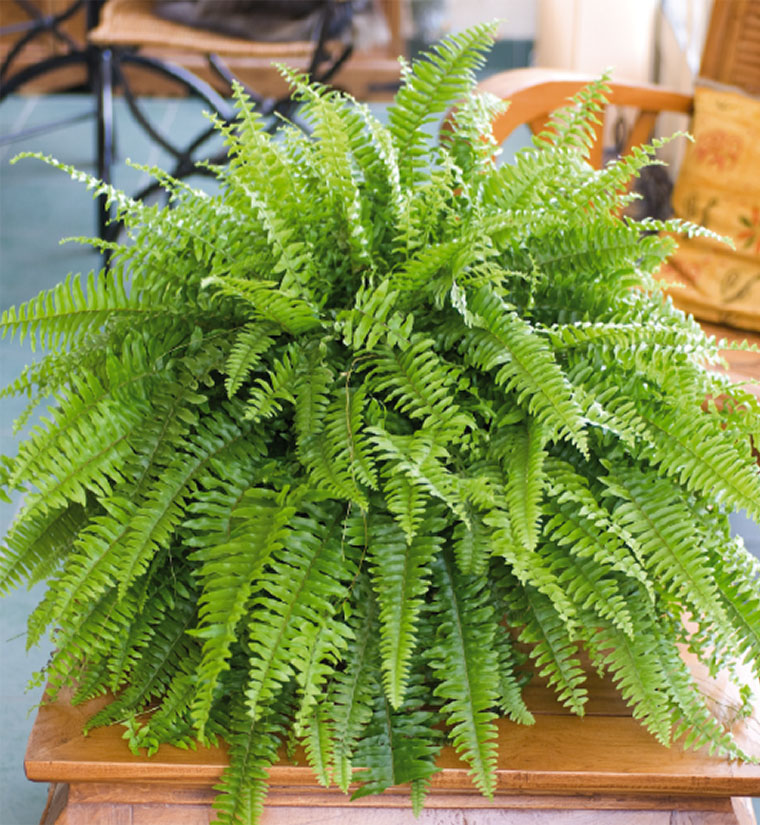 Sant les plantes d polluantes les plus efficaces pour la for Plante exterieur plumeau