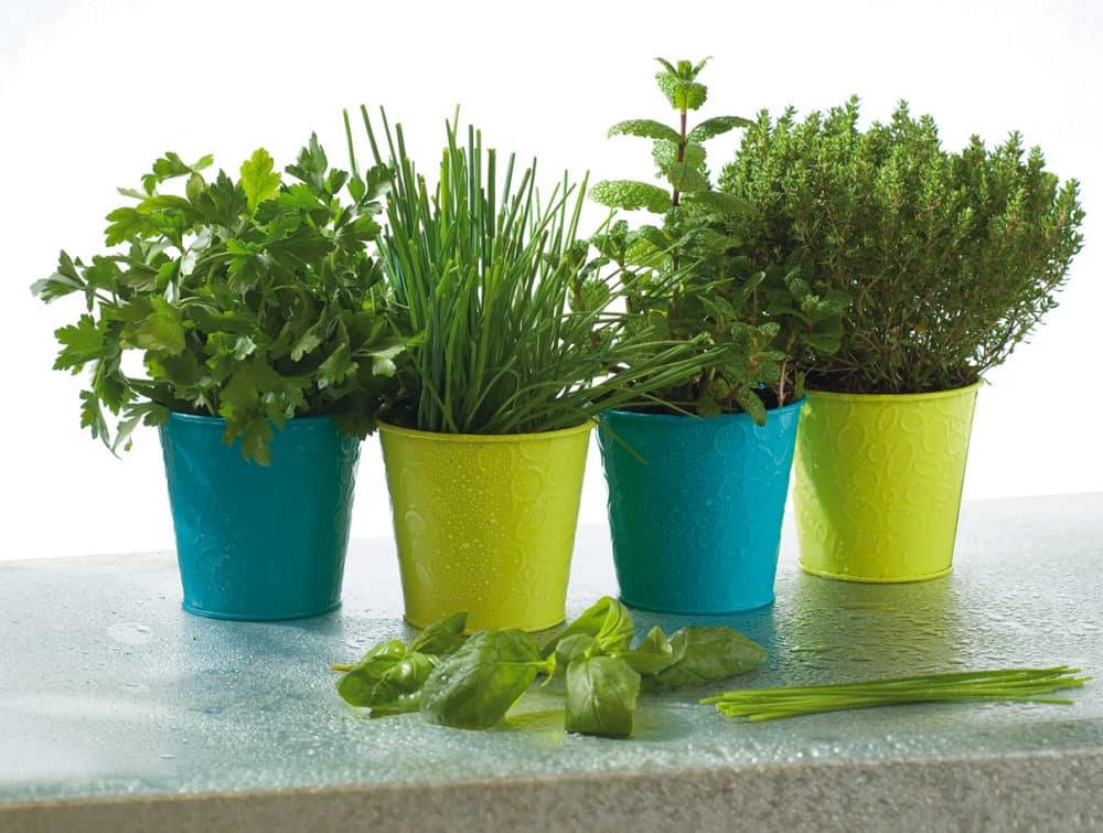 4 plantes aromatiques à faire pousser chez vous 6