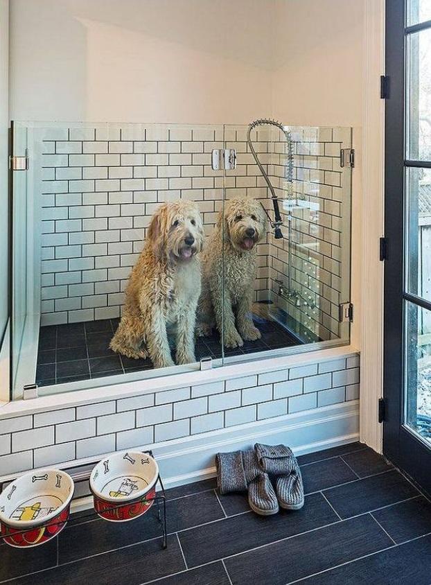 3 recettes de shampoing pour animaux fait maison