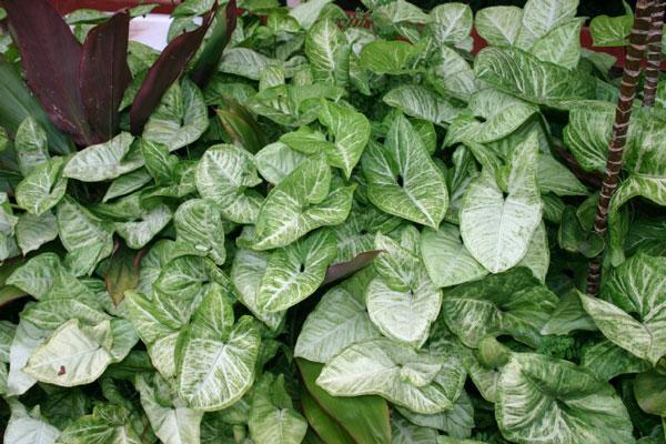 20 plantes d 39 int rieur conna tre for Plantes d interieur toxiques