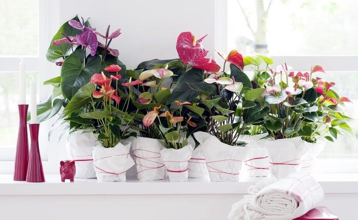 20 plantes d'intérieur pour égayer votre maison ! 6