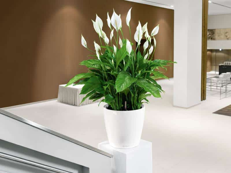 Interior Plants Decoration Apartments