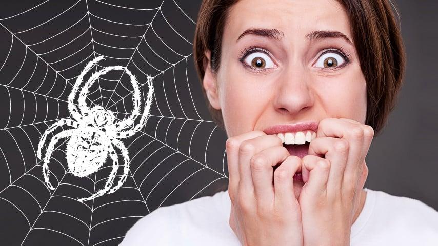 3 astuces pour se d barrasser naturellement des araign es for Se debarrasser des araignees
