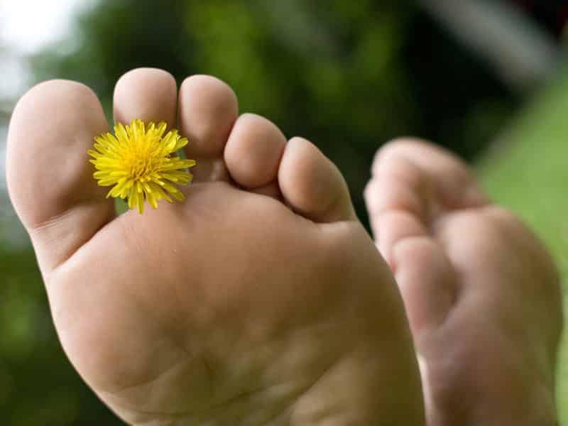 3 astuces pour combattre les verrues - Plante pour soigner les verrues ...
