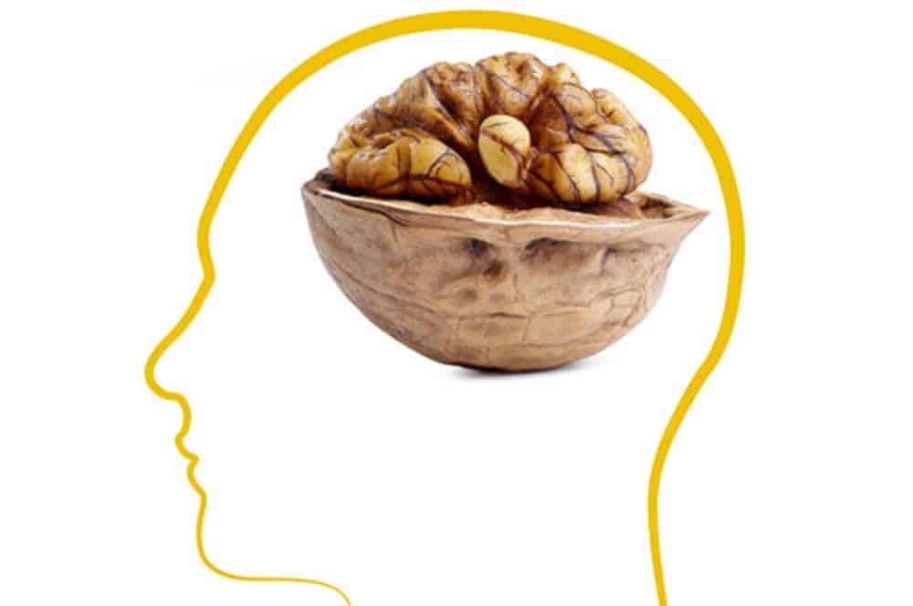 Ce qui arrive votre corps quand vous mangez 7 noix for Quand ramasser les noix