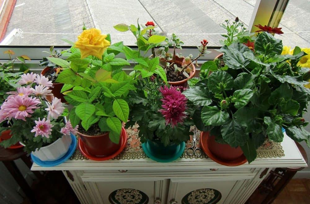 ces plantes d coratives sont toxiques pour les enfants sant