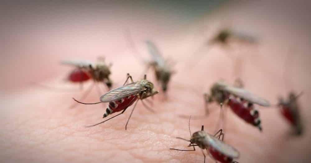 4 r pulsifs moustiques que vous avez d j chez vous. Black Bedroom Furniture Sets. Home Design Ideas
