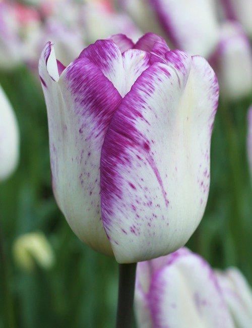votre fleur préférée en dit long sur votre personnalité !