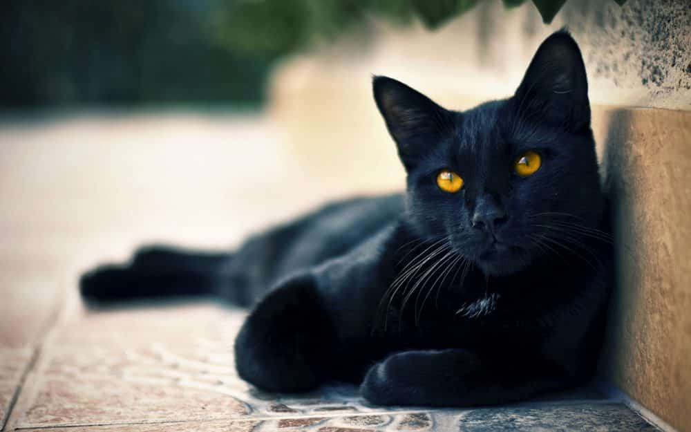 6 faits hallucinants sur les origines des superstitions ! 9