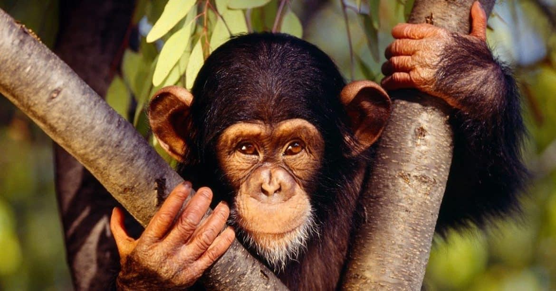 Sauvé par des singes, un chilien raconte son histoire 4