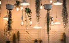 plantes qui améliorent l'atmosphère