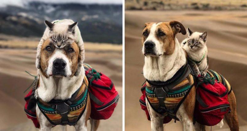 Elle voyage avec son chien et son chat ! Découvrez leurs aventures en images ! 8