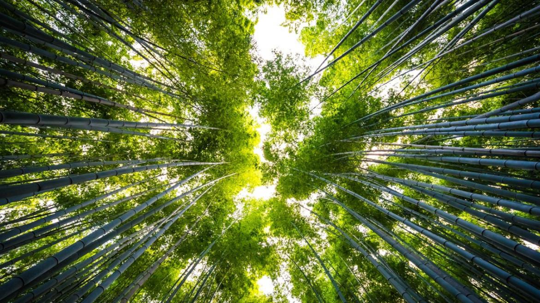 Top 10 des forêts les plus mystérieuses au monde 27