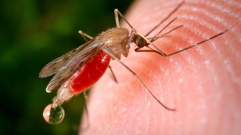 7 remèdes naturels pour se protéger des piqûres d'insectes 2